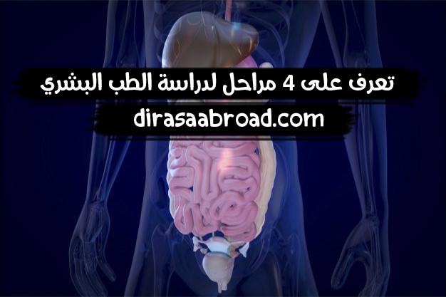 مراحل دراسة الطب